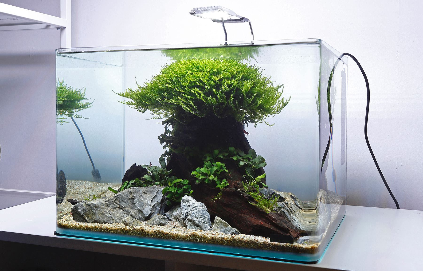 Aquarium Gardens Visit our Aquascaping Showroom