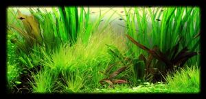 Jungle Style Aquascape