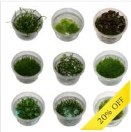 Mixed Tissue Culture Plants