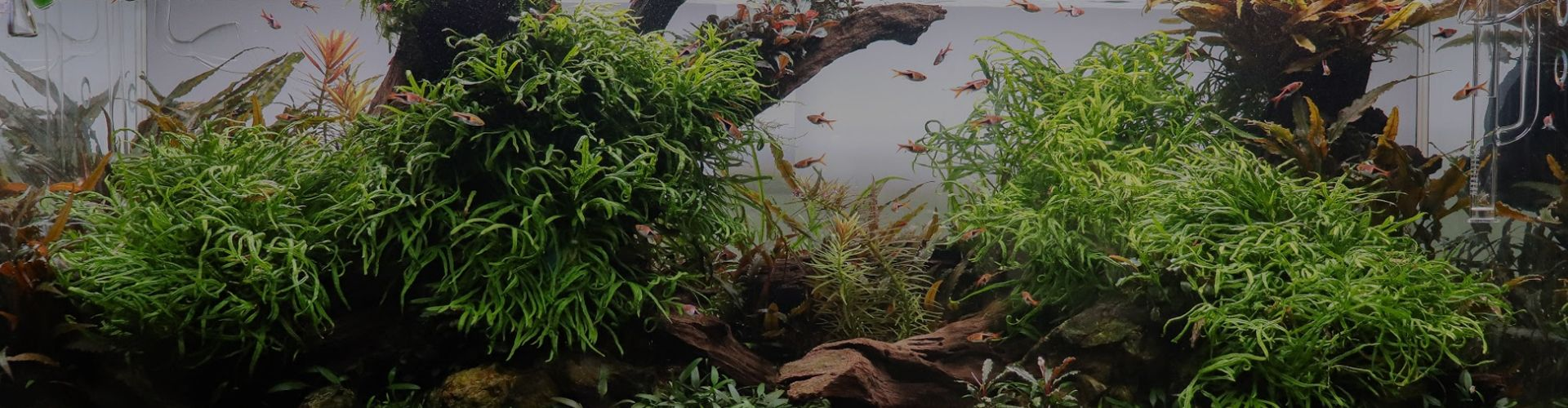 Aquarium Plants from Aquarium Gardens