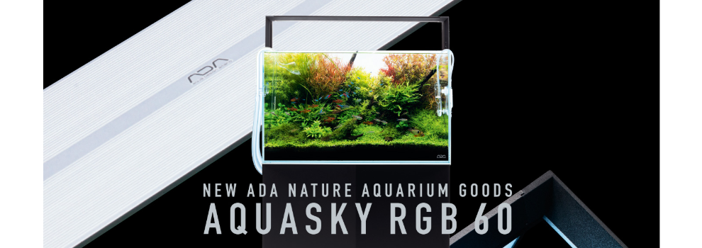 Evolution Aqua Aquascaper Aquariums